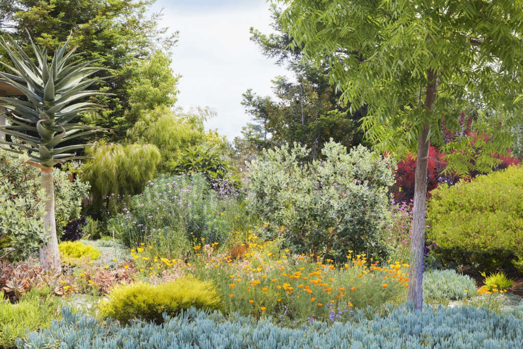 Drought Tolerant Doesn't Mean Drab