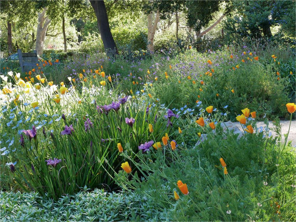 A Visually Impactful Meadow