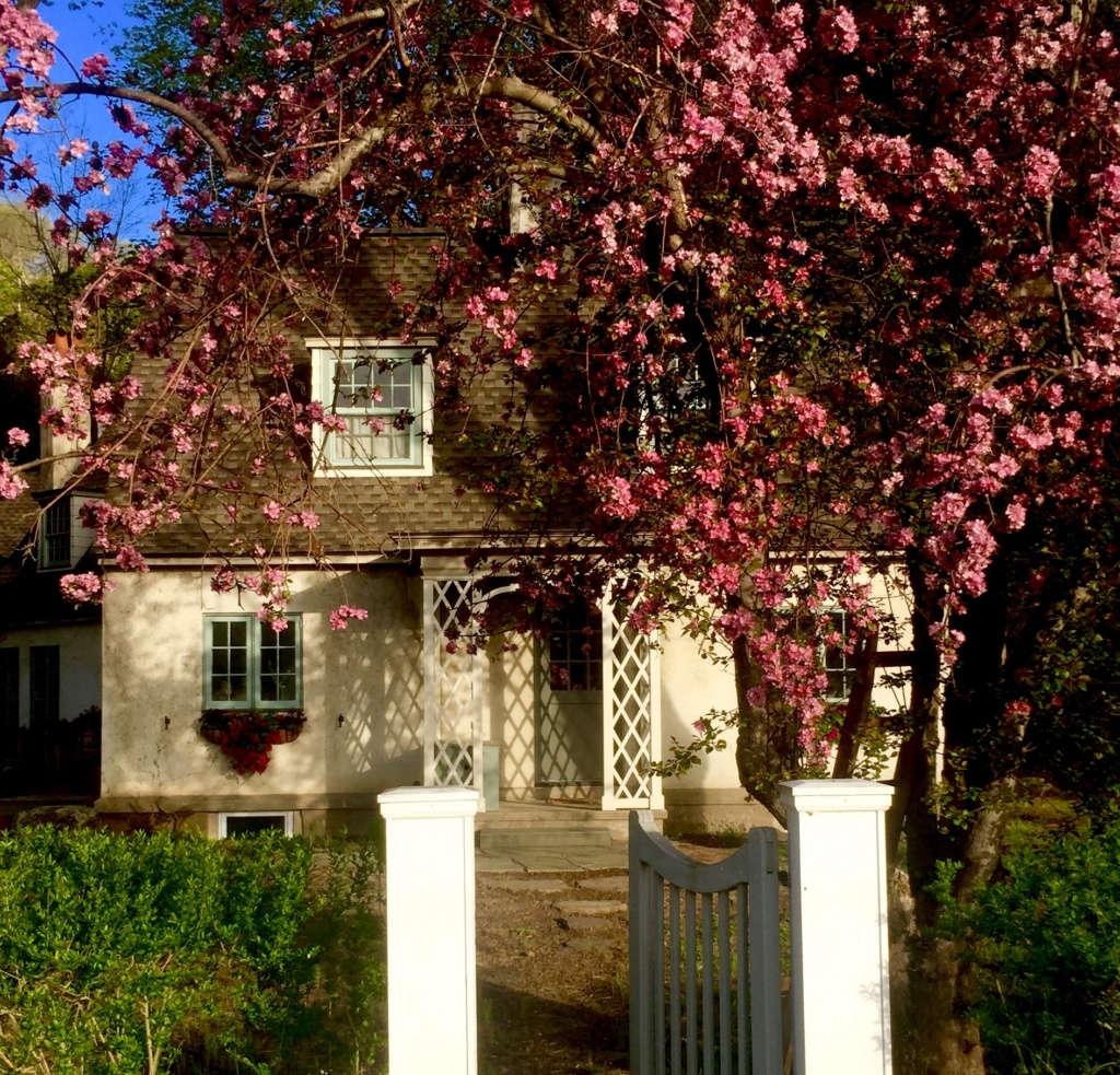 Glen Hollow: Apple blossoms in bloom