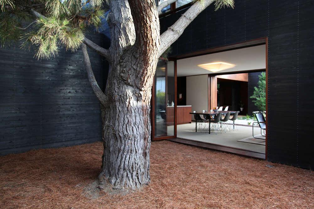 Pine Needle Courtyard