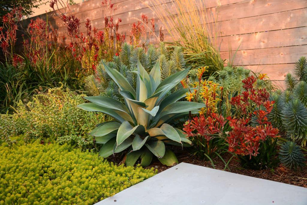 Vibrant Succulents and Perennials