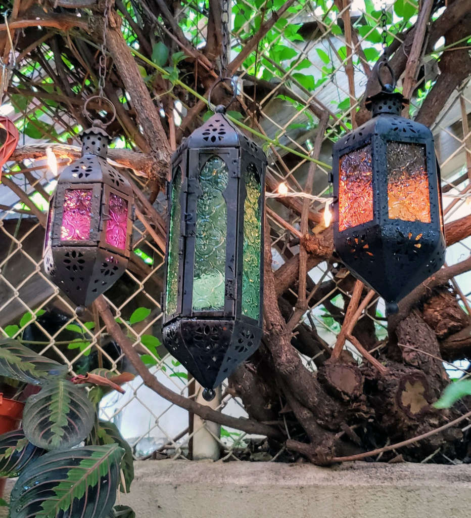 Detail of Lanterns and Trunk of Trumpet Vine