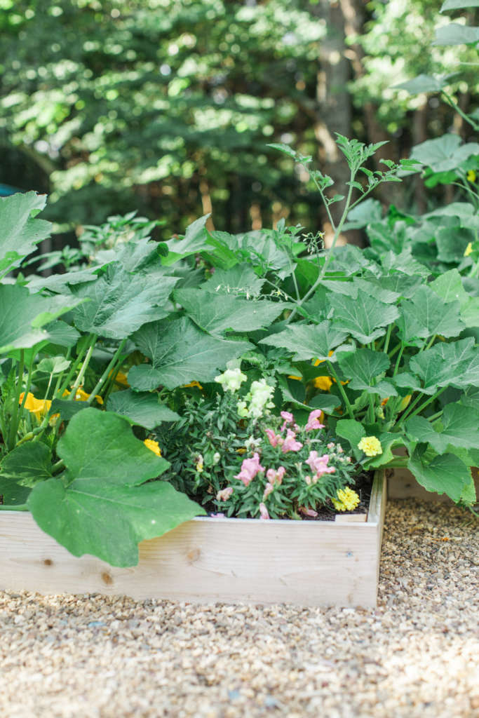 'Potager' Mixing Flowers and Vegetables