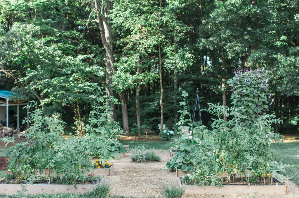Companion Planting Beds