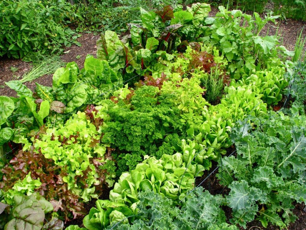 the lettuce corral