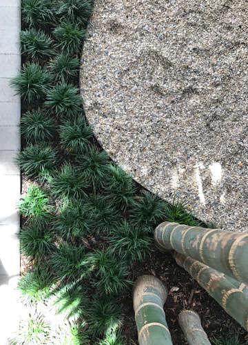 cabada palms, mondo grass