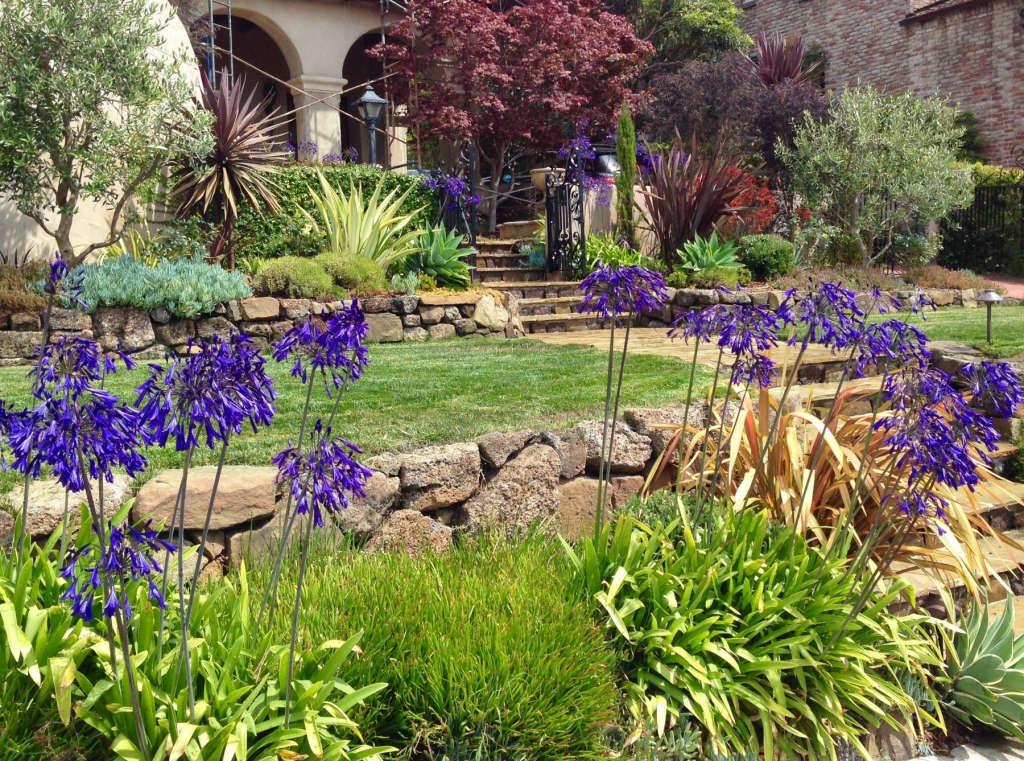 Colorful Mediterranean Plants