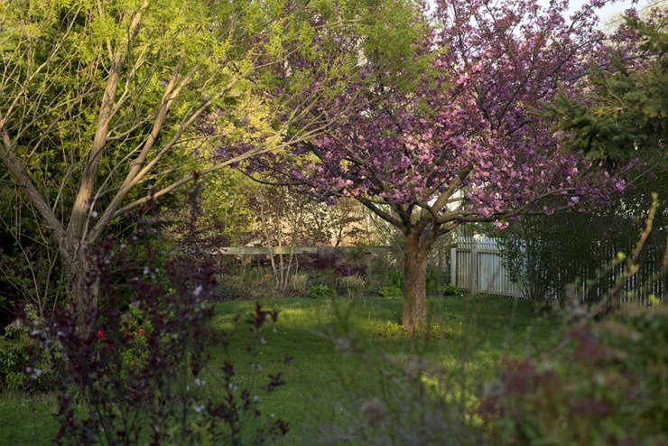 The Sakura and Buffer Garden