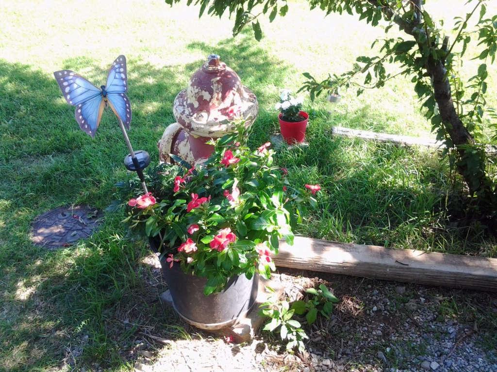 Unexpected arrangement of summer flowers.
