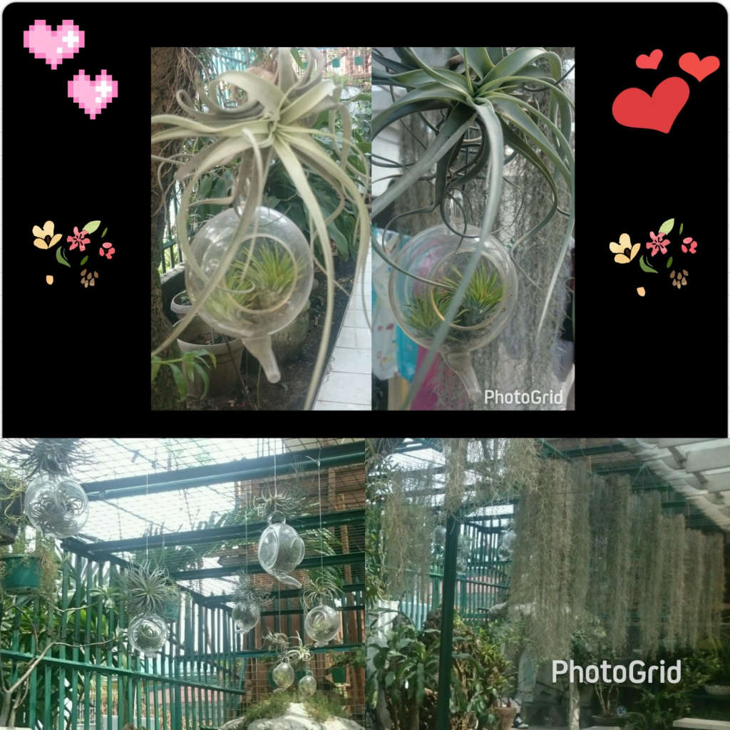 My garden patio airq