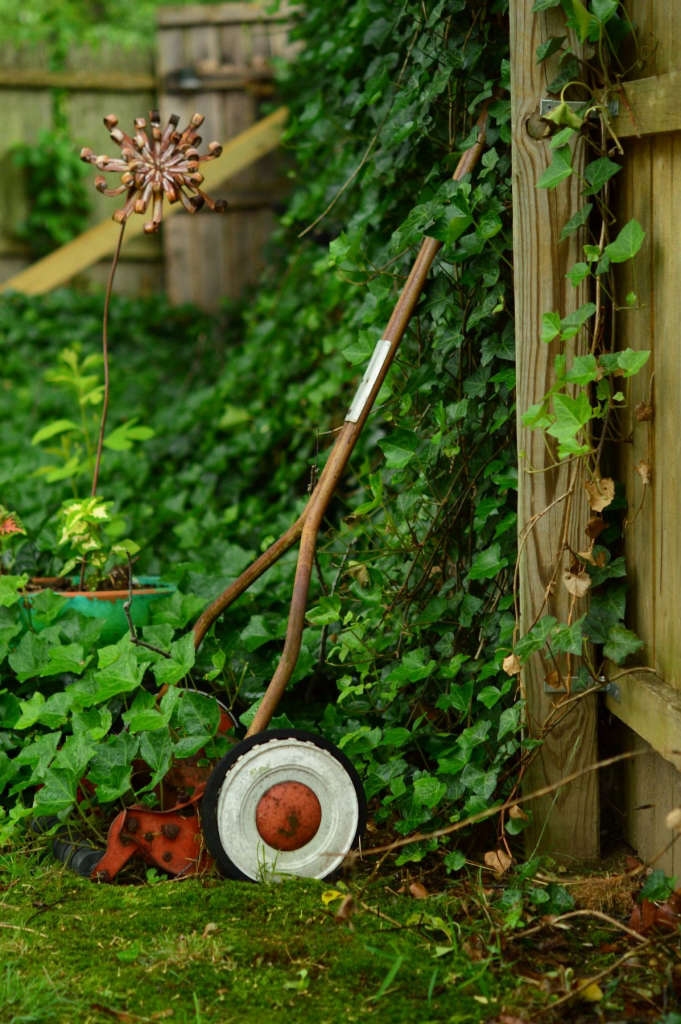 ivy and an old push mower