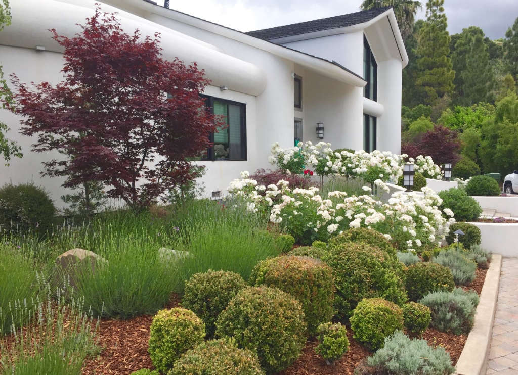 Front Garden (side view)