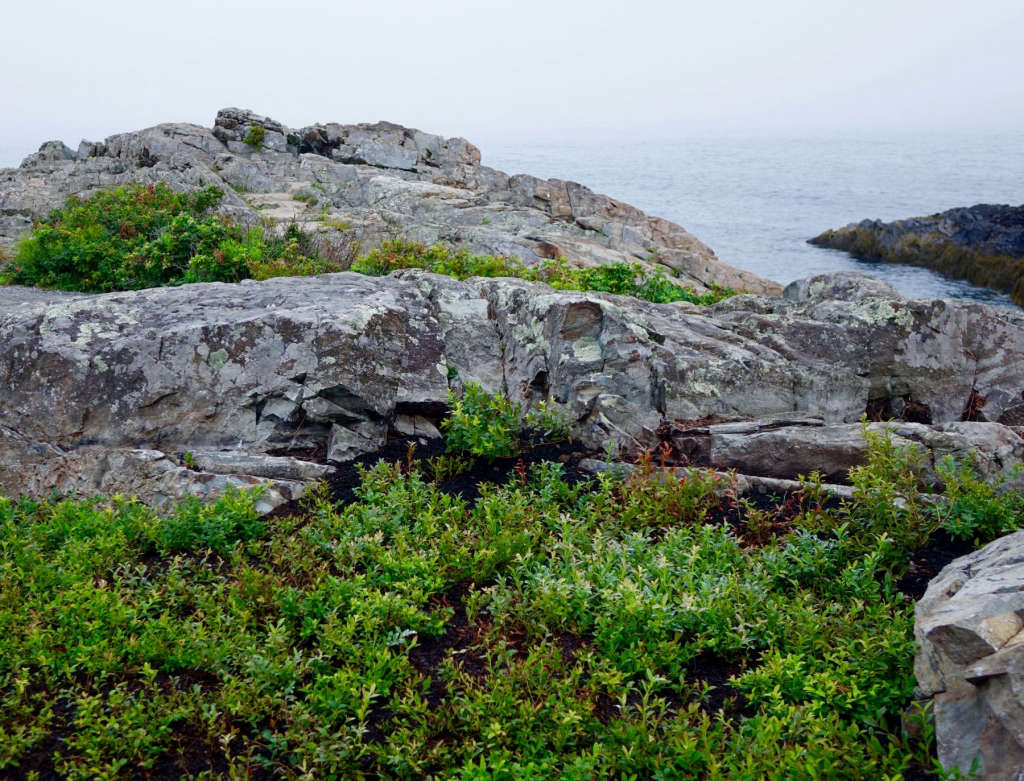 Stone Outcropping with Lowbush Blueberry