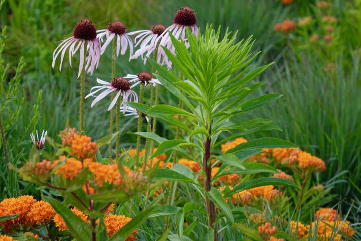 A perfect color palette: Asclepias tuberosa, Echinacea pallida, and Liatris scariosa mingle in a Maine meadow, attracting pollinators.See more of this garden in our \20\17 Considered Design Awards.Photograph courtesy ofThomas Lynch Design.