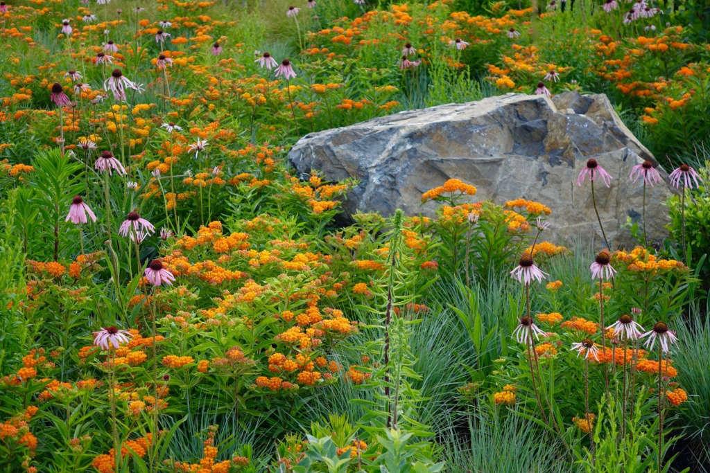 The Meadow in Full Bloom