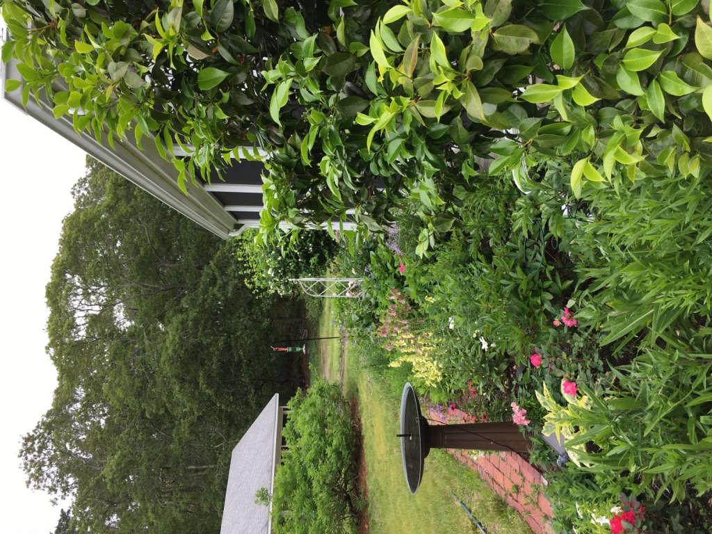garden along side of porch