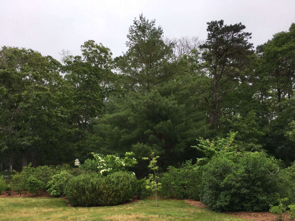 shrub garden in front yard