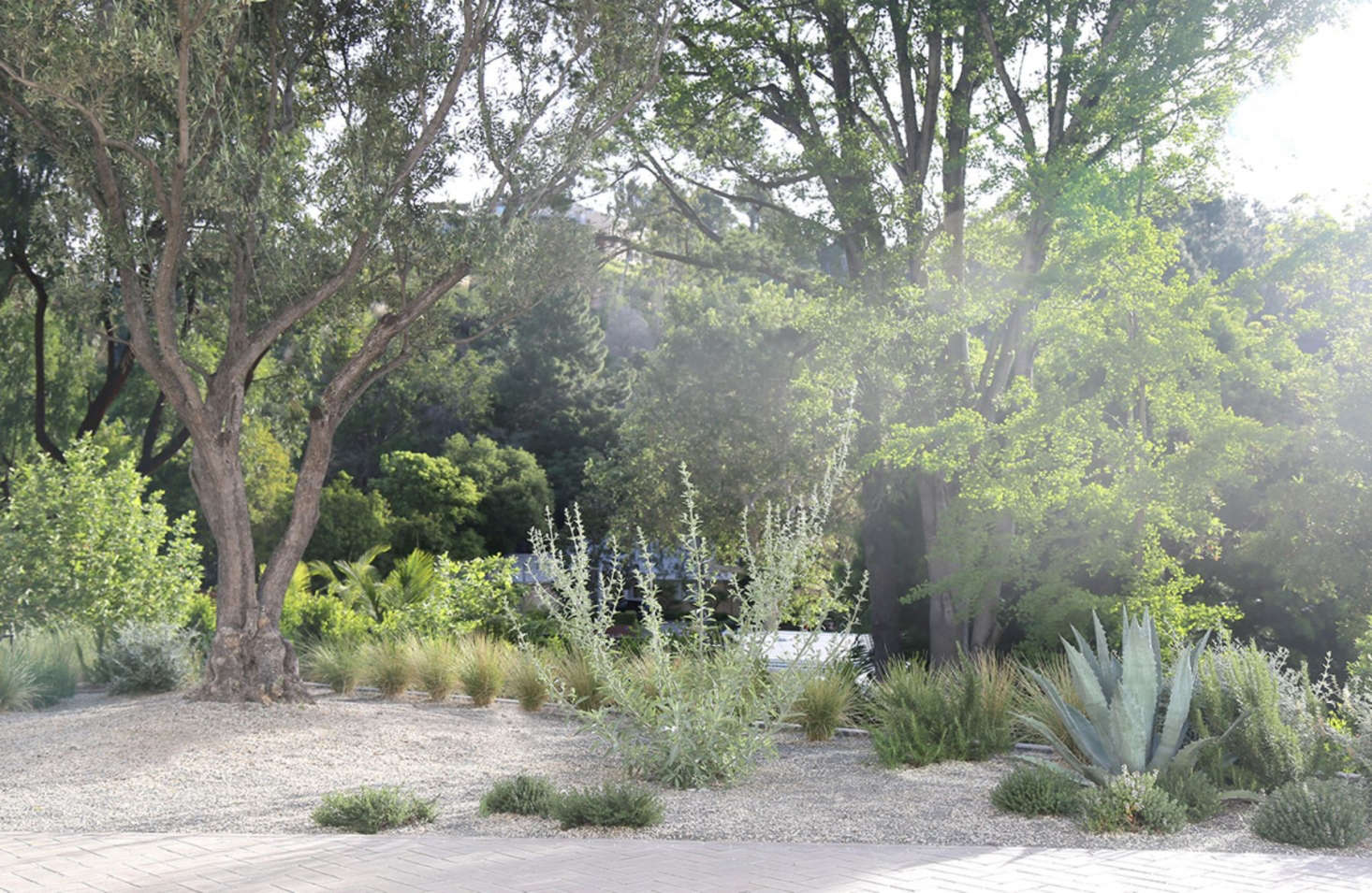Studio Terremoto designed a Bel Air Dream Pop landscape featuring century agave rooted in a bed of decomposed granite. See more of this project in our  Considered Design Awards contest.