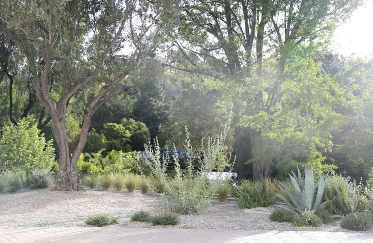 White sage, Century Agave, and decomposed granite create a composition in a Bel Air, California landscape by Terremoto. See more of this landscape in our  Considered Design Awards.