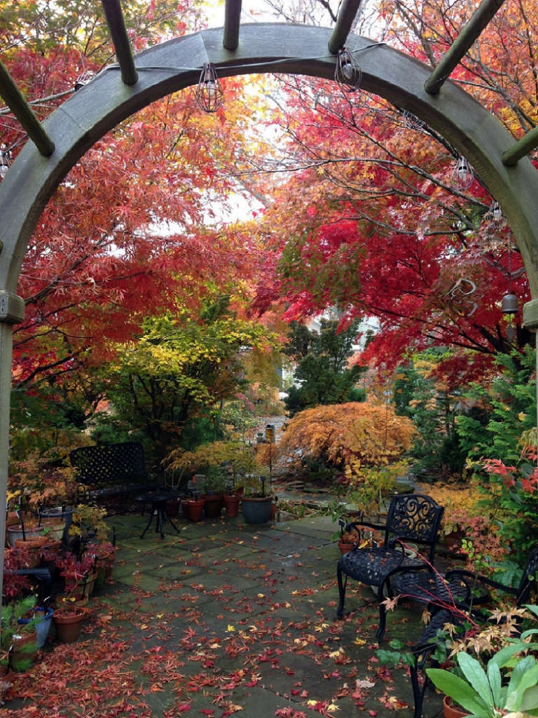 Shade patio in glorious fall color