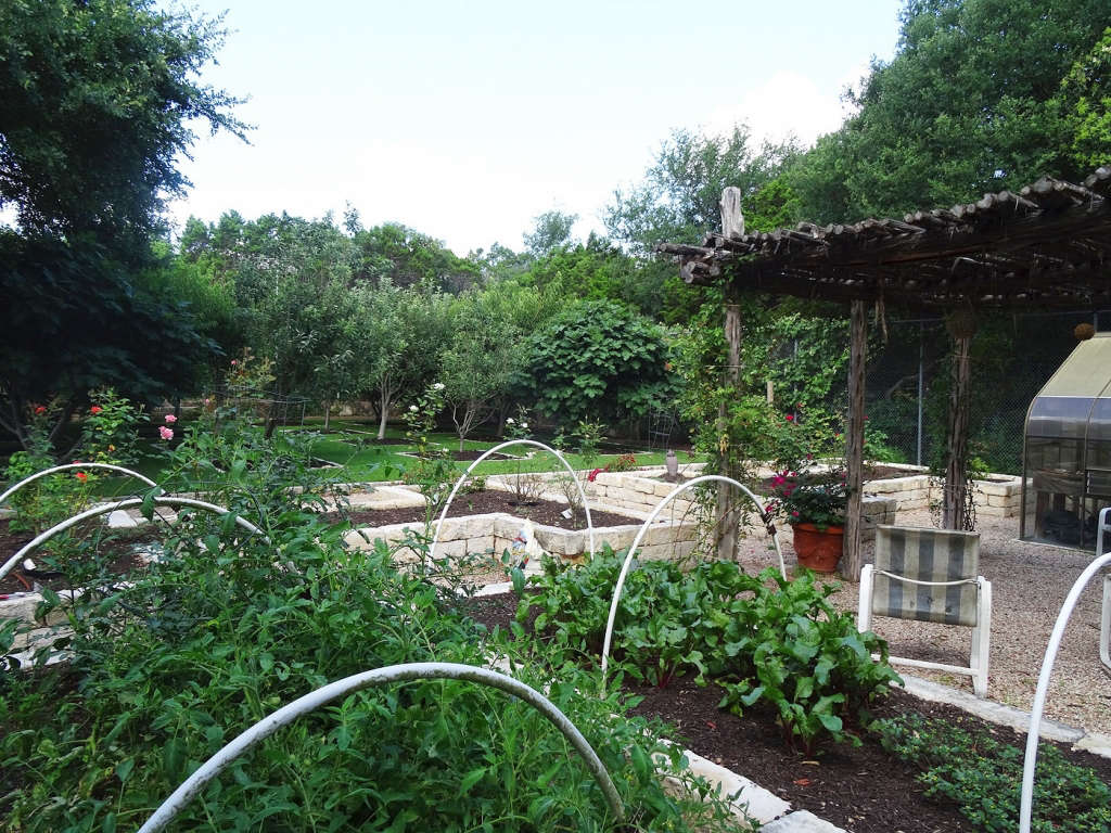 Vegetables and fruit trees