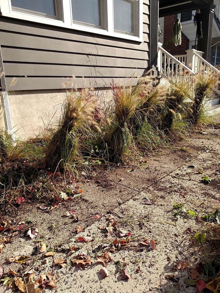 late_fall_grasses_tied_for_winter.jpg
