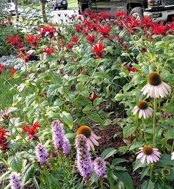 sustainable_garden_06.jpg