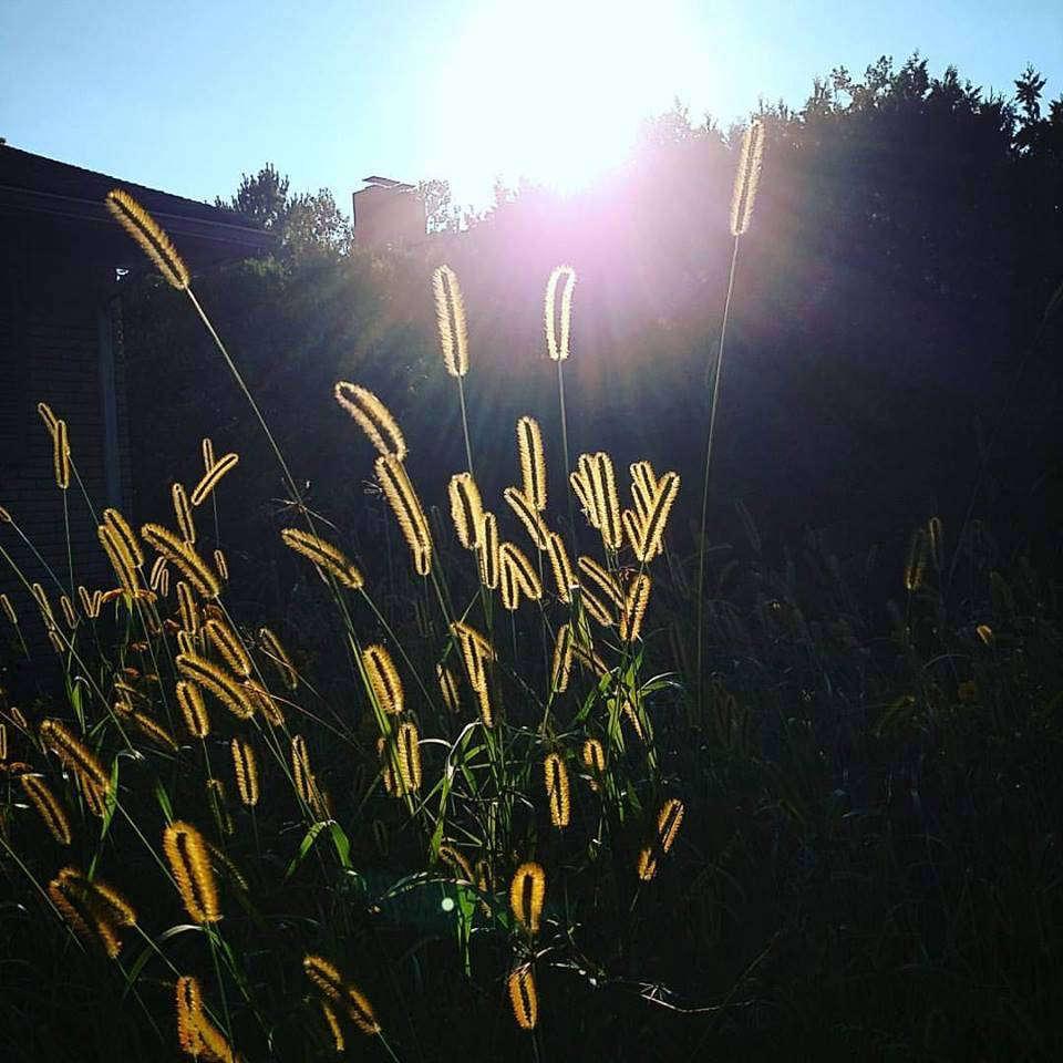 Autumn_Light.jpg