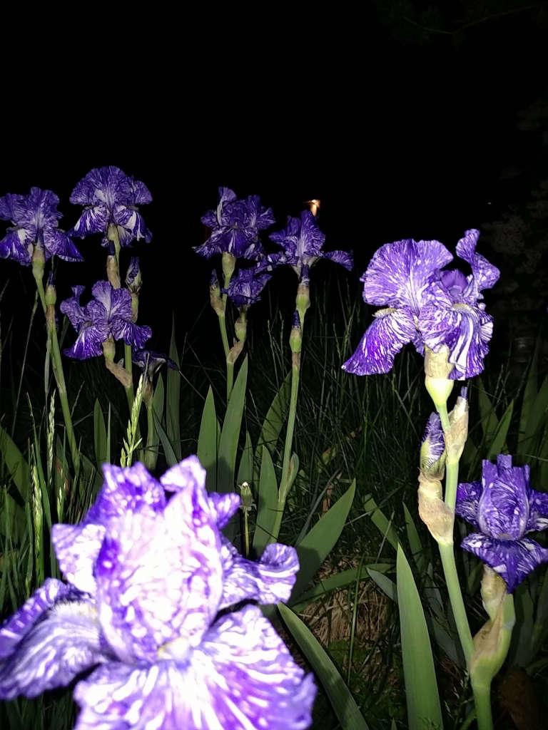 Plants_at_night.jpg