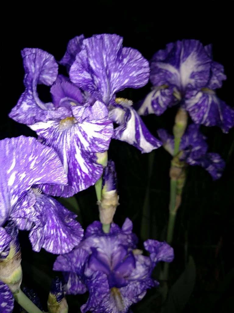 Plants_at_night_close_up.jpg