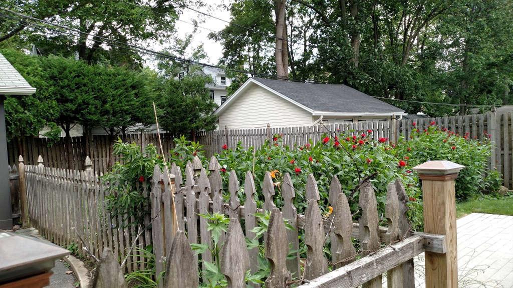 Fence_Year_3.jpg