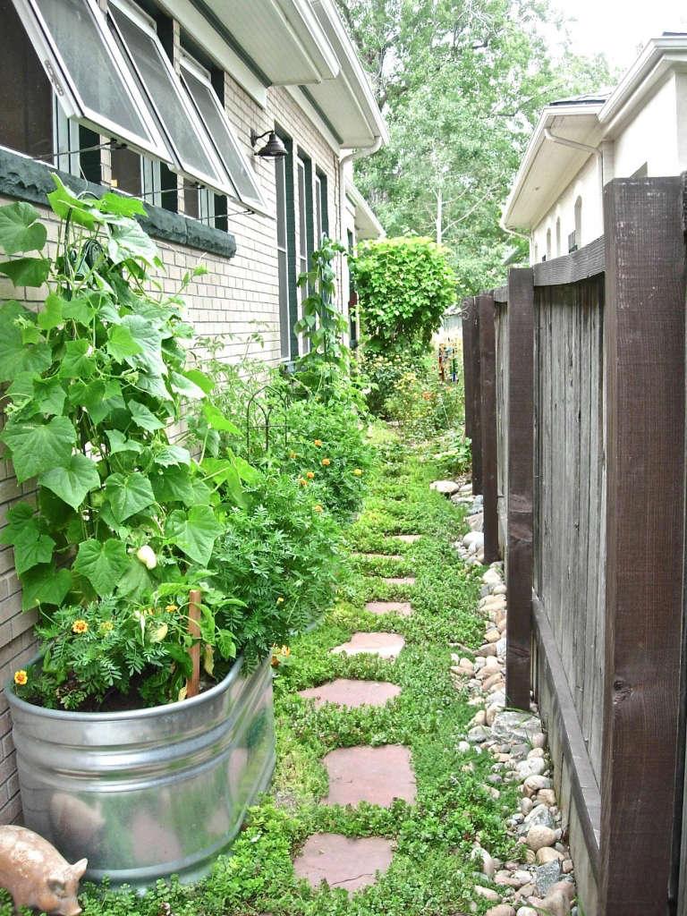 The side yard garden...