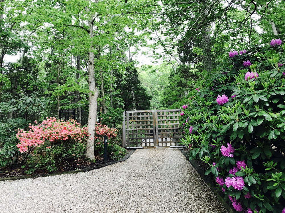 Gate, Gravel and Evergreens
