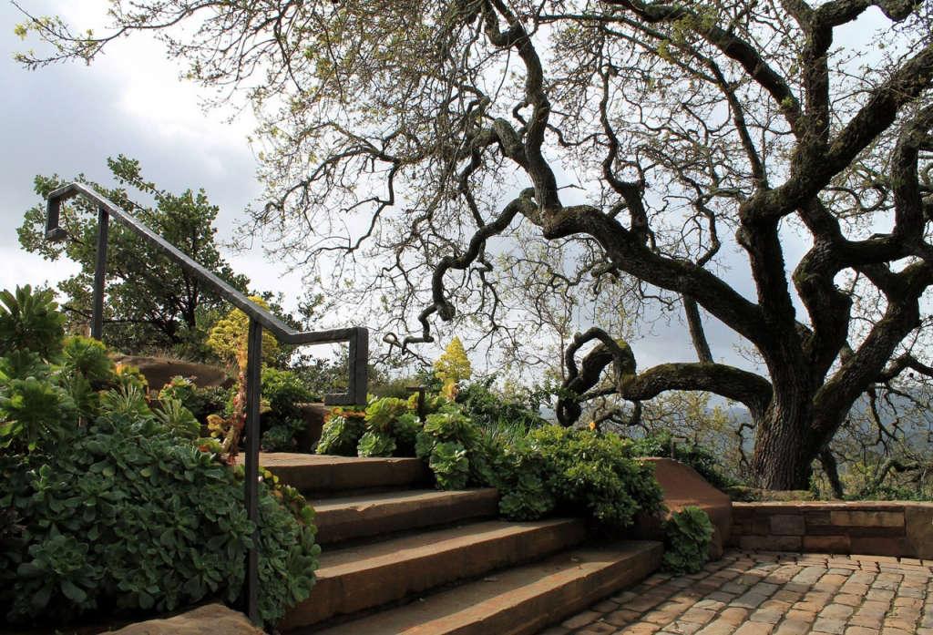 Reclamation of Native Oaks