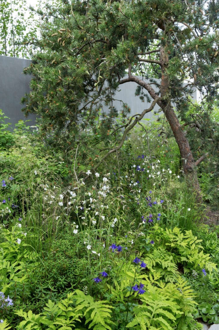 Photograph by Marianne Majerus courtesy of Harris Bugg Studio. See more of this garden in our  Gardenista Considered Design Awards.