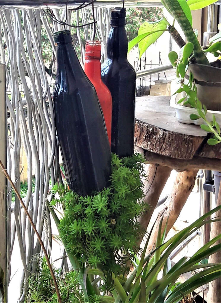 "4 Sabi's Wine bottle ""bonsais"""