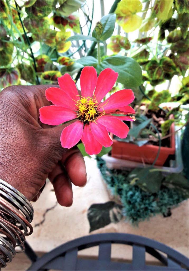6 Sabi's Cosmos or weed