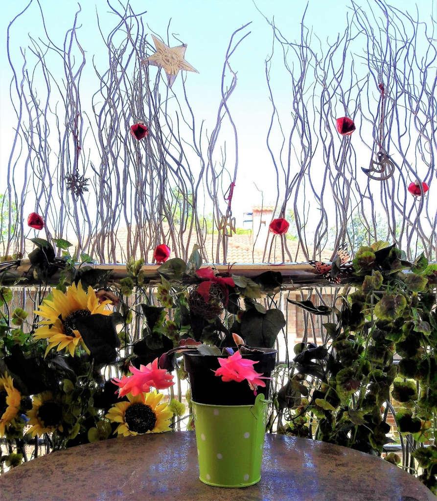 8 Sabi's Christmas cactus