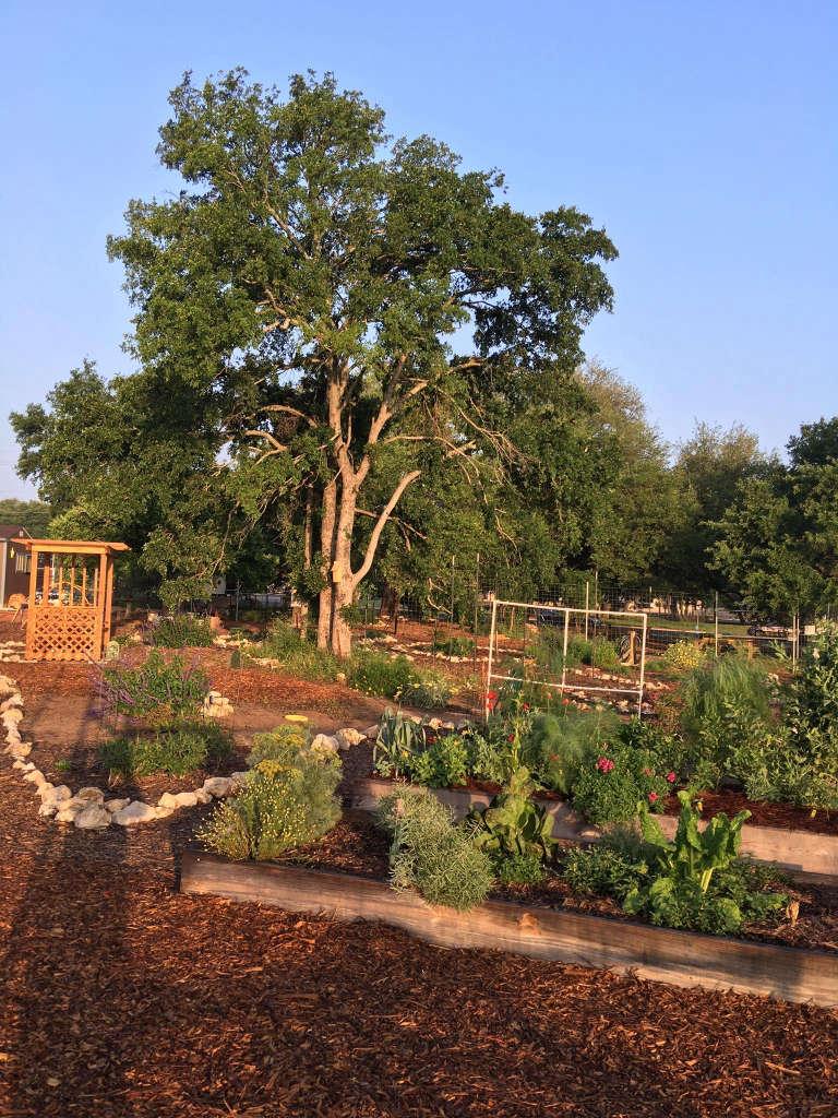 The garden at dawn