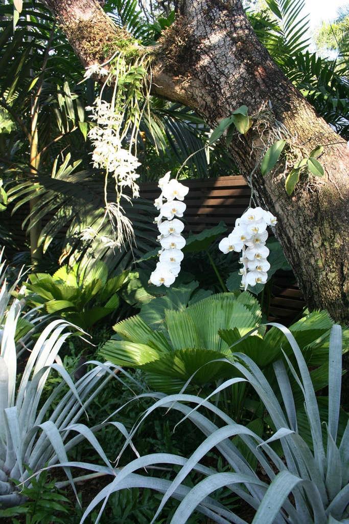 Subtropical Planting | Oak Garden at Silver Bluff | Miami, Florida