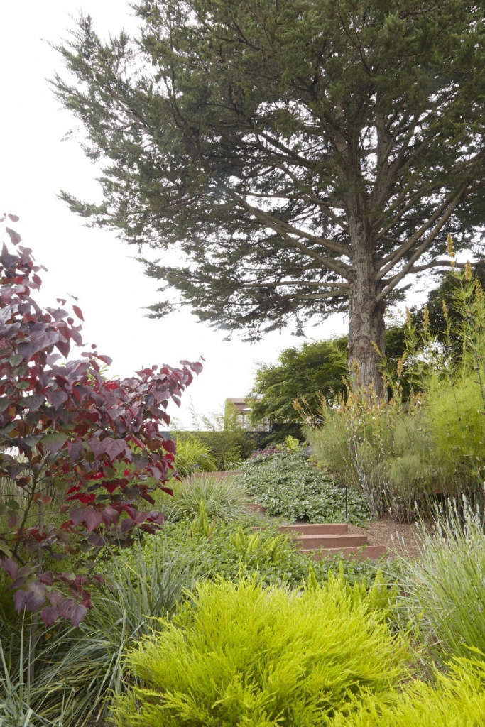 Landmark cypress