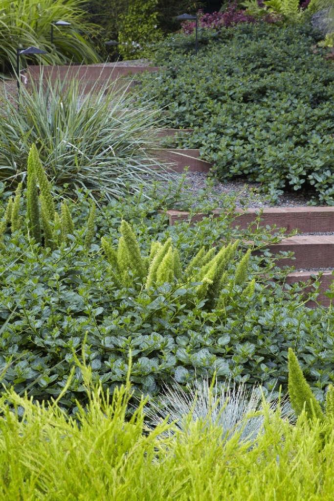 Luxuriant low-water plantings