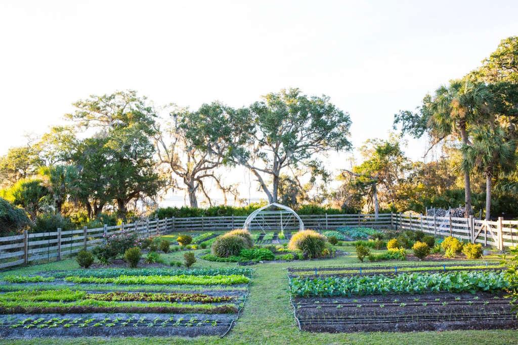 Low Country Kitchen Garden