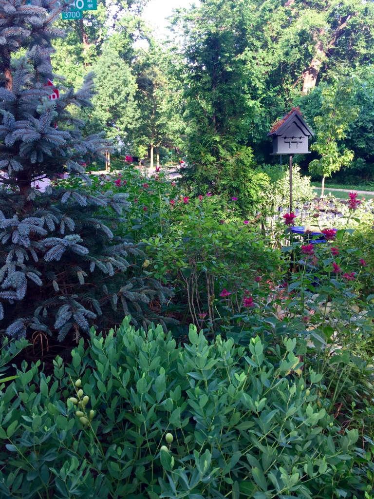 Pollinator's Corner
