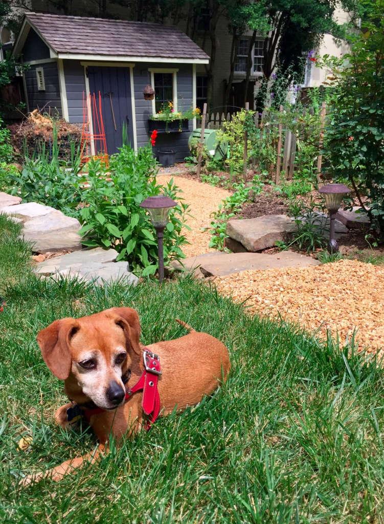 Petite Cutting Garden