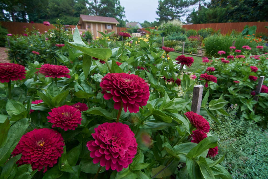 Giant Zinnias and so much more!